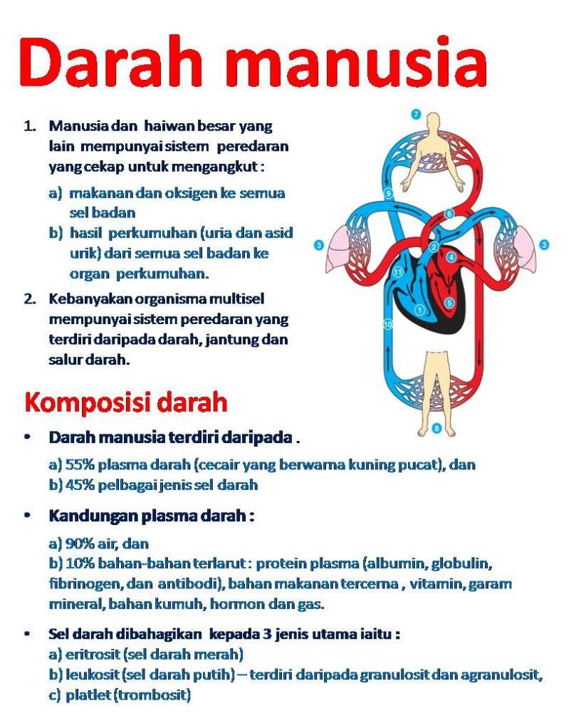 sistem peredaran comment on this picture darah manusia wannura anatomi
